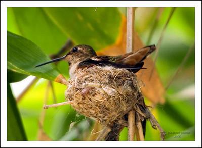Birds of the Long Beach, California Area