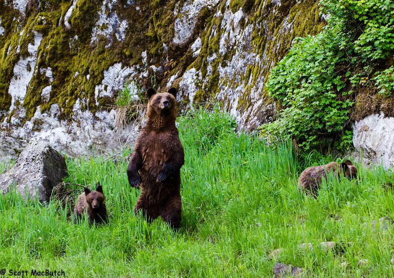 Mom & Cubs
