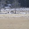 "Short ""digi scope"" video of Junction Butte pup's playing."