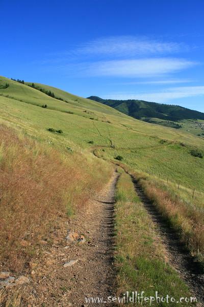 Mount Sentinel trail, Missoula, Montana