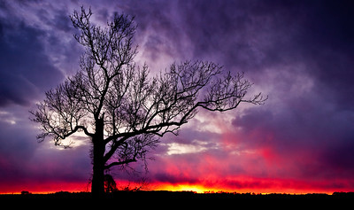 Meet Me At The Old Oak Tree