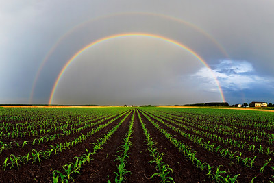 Rows to the Rainbow