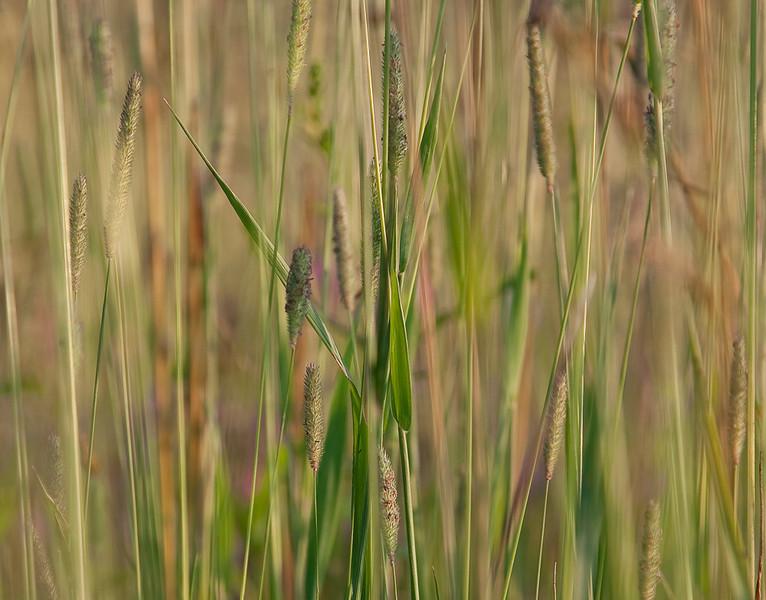 Green grasses 5