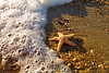 Sea Star on the Edge<br /> Sea Star Outer Banks North Carolina
