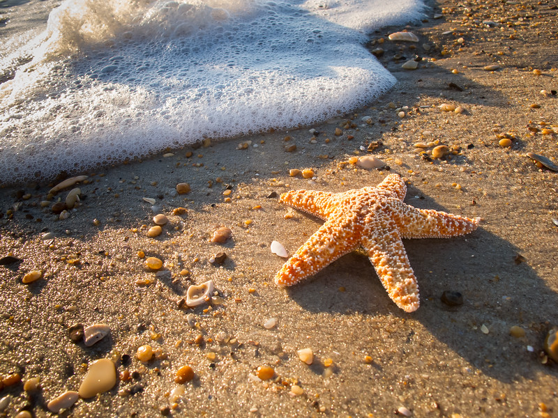 Sea Star Stranded<br /> Sea Star Outer Banks North Carolina