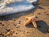 Sea Star Stranded<br /> Sea Star Outer Banks North Carolina