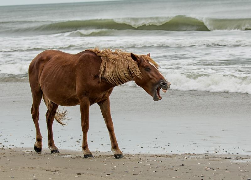 Wild Horse Calling