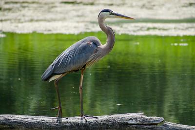 North Chagrin Duck Pond