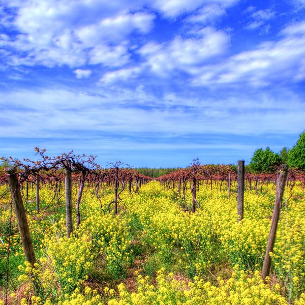 North East Vineyard 3