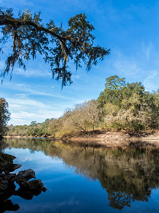 At a bend in the Suwannee River.