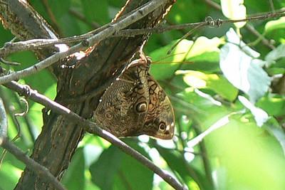 Northeast Mexico Butterflies 2008