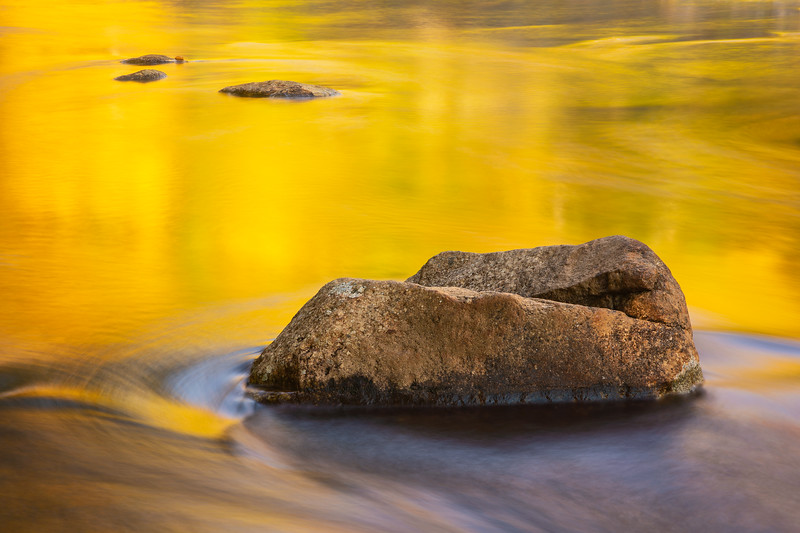 Golden reflections of autumn
