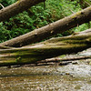 Fallen trees in Fern Canyon - Prarie Creek