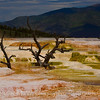 The Upper Terrance, Mammoth Hot Springs.