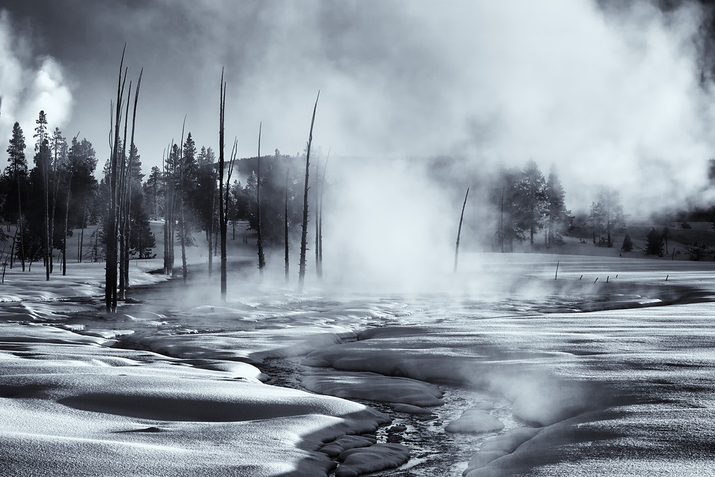 Steamy Sunrise, Tangled Creek, Yellowstone NP B&W