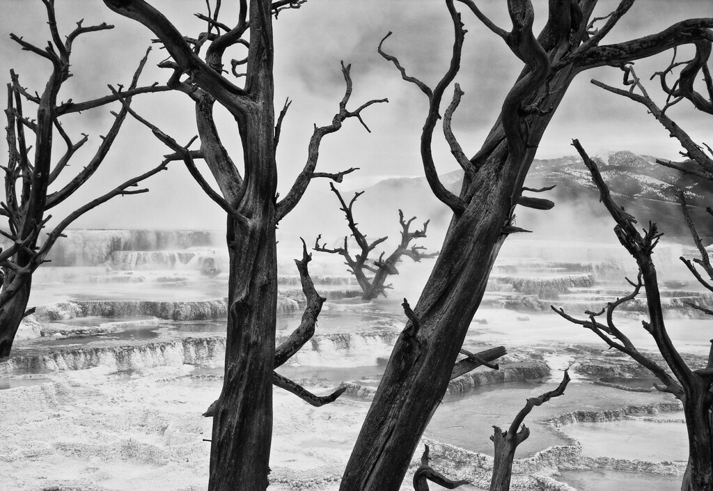 The Forbidden Zone (BW)<br /> Mammoth Hot Springs