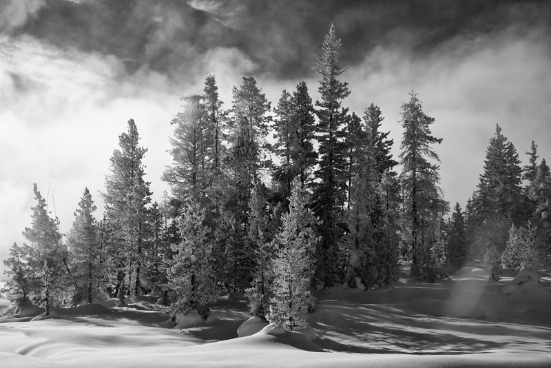 Pine Trees and Mist (BW), West Thumb Geyser Basin