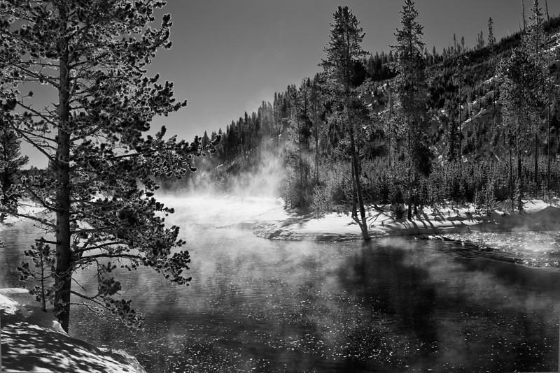 Backlit Tree and Steam over the Firehole River (BW), Yellowstone NP