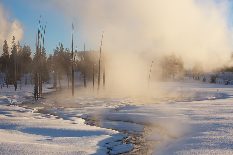 Steamy Sunrise, Tangled Creek, Yellowstone NP