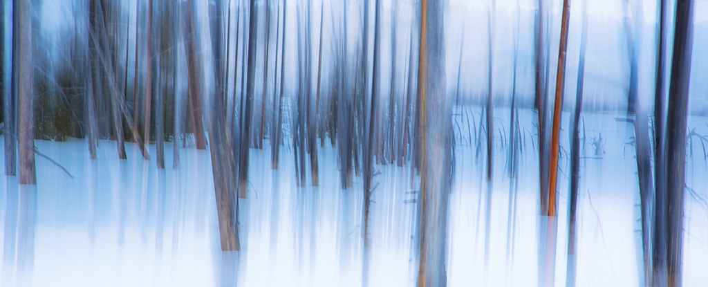 Lodge Pole Pines Abstract.  Fountain Paint Pots.  Yellowstone NP