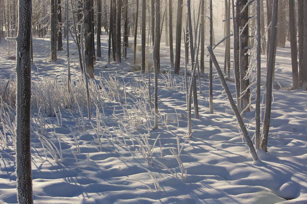 Frost-covered trees at Tangle Creek