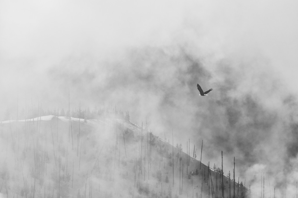 Fly Through the Mist, BW