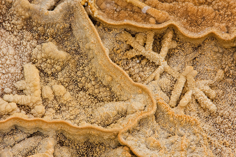 Mineral Patterns #1<br /> Mammoth Hot Springs