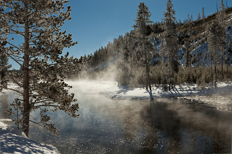 Backlit Tree and Steam over the Firehole River, Yellowstone NP