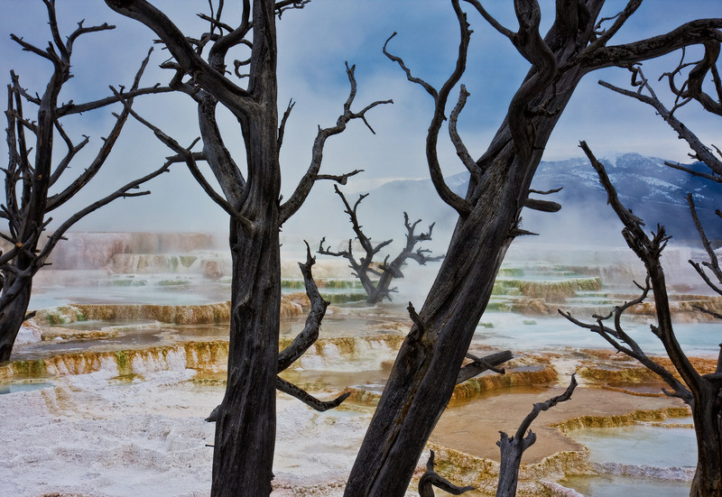 The Forbidden Zone<br /> Mammoth Hot Springs