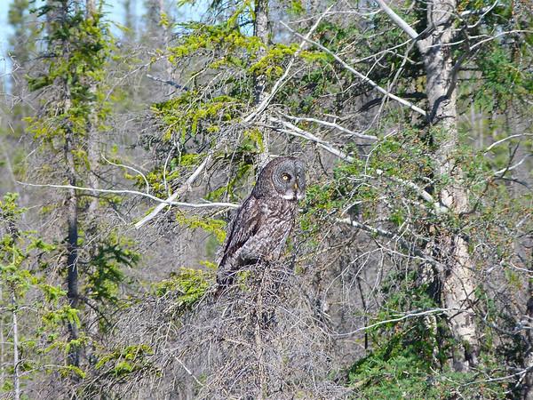 Northwest Territories Birds
