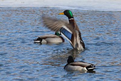 Wings Over Water — Szárnyak a víz felett
