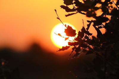 Leaves on Fire — Lánglevél