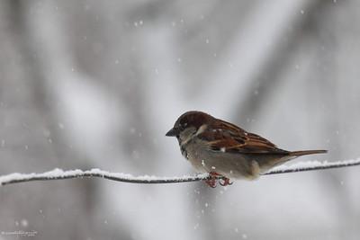 Birds of Winter