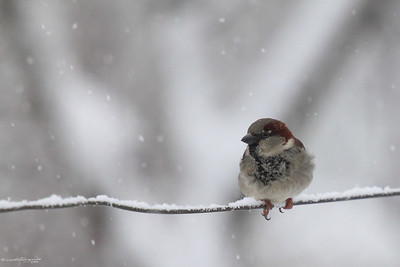 Birds of Winter