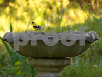 June at the bird bath.