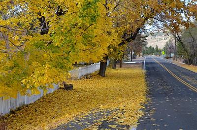 P00002_DSC_0049_Fallen_Leaves_at_bridge_street