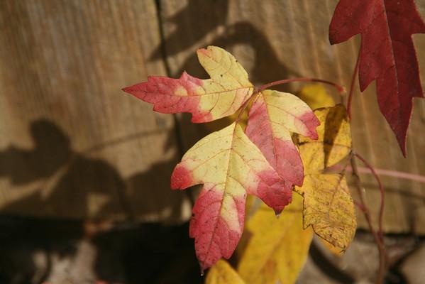 November color
