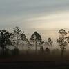 Smokey Pines
