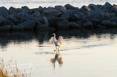 Egret appears to walk on water near Silver Lake Harbor on Ocracoke.