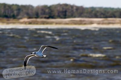 Gull near Cedar Island.