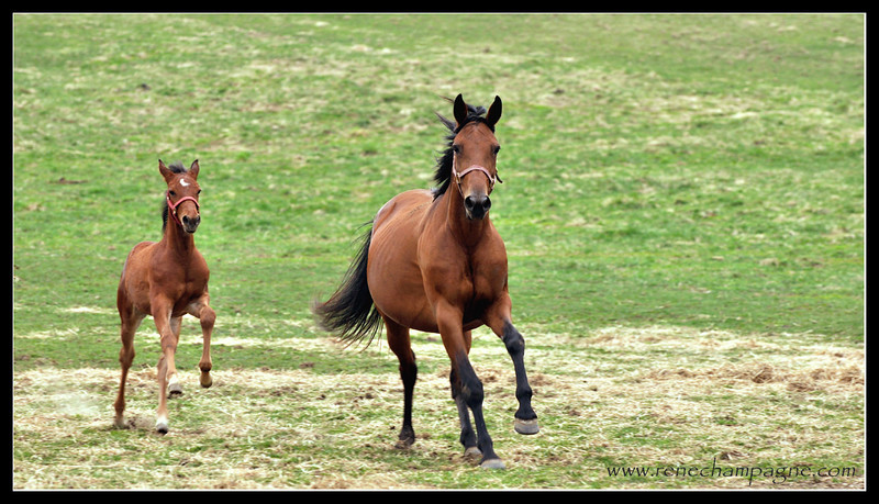 Wait for me.<br /> <br /> Bailey Bug and Ok Eros - Oak Knoll Stables, Elizabethville ON