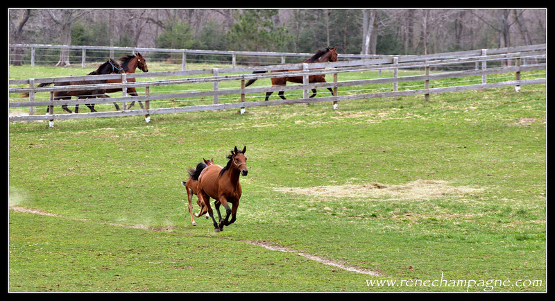 Trying to keep up with Mom.<br /> <br /> Bailey Bug and Ok Eros - Oak Knoll Stables, Elizabethville ON