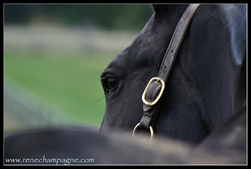 Jennie's Girl - Oak Knoll Stables, Elizabethville ON