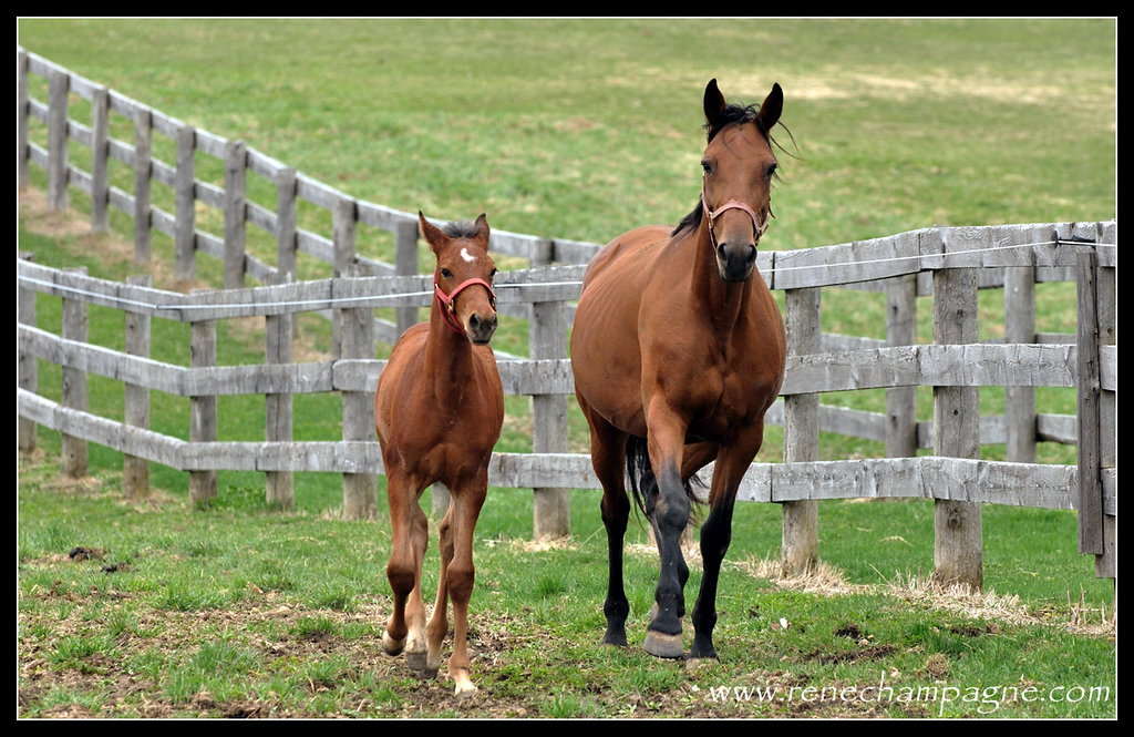 Bailey Bug and Ok Eros - Oak Knoll Stables, Elizabethville ON