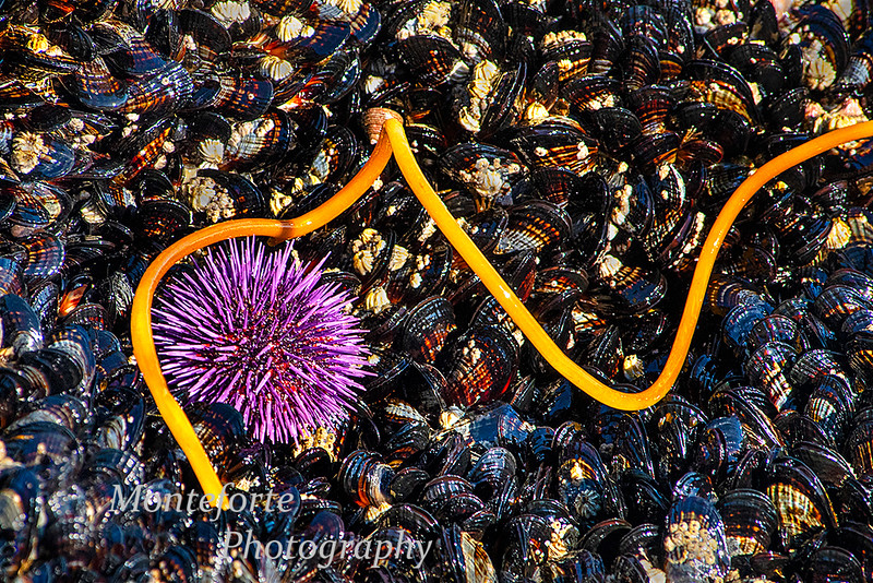 Sea urchin kelp and mussels