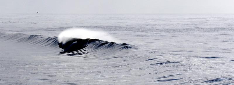 Ocean / Waves