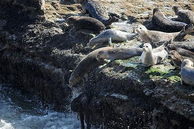 Ocean at Wilder Ranch State Park 3-15-14