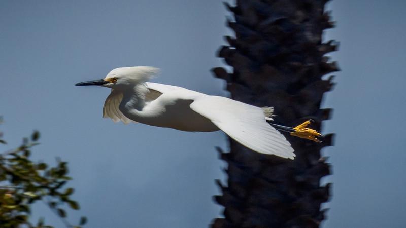 Alamitos Bay - 27 Apr 2014