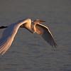 Great Egret at Bolsa Chica Reserve - 28 Oct 2012