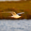 Bolsa Chica Reserve - 10 May 2014